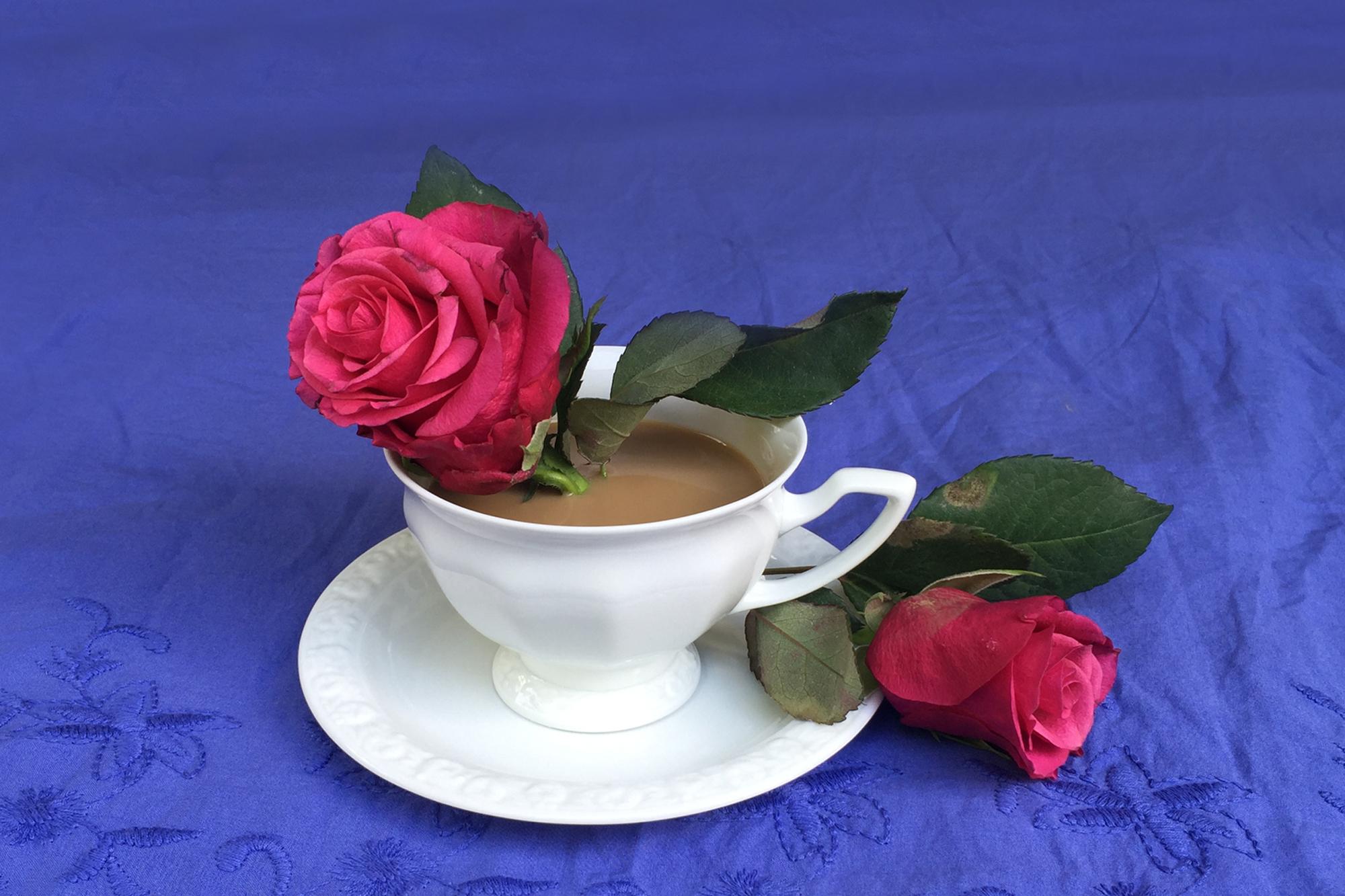 Rose im Kaffee
