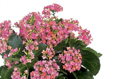 """Alles Gute zum Muttertag – """"Sag Danke mit Blumen""""... Blumenverkauf am Do. 6. Mai von 8.00 - 13.00 Uhr am Wochenmarkt Seefeld"""